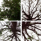 IconsWorks_unarbol